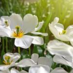 Cirugía estética en Primavera: ¿Es un buen momento?